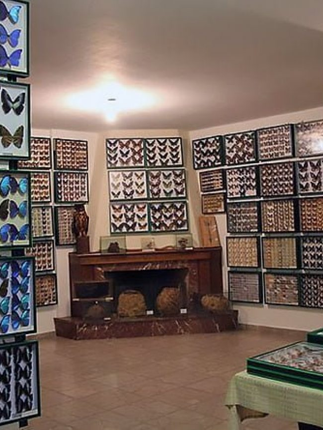 Entomological museum of Volos